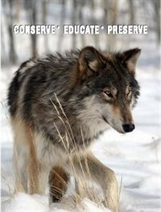 Colorado Wolf and Wildlife Center - Divide, CO  80814
