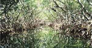 Capt. Sterling's Everglade Tours, Key Largo
