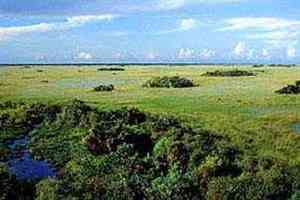 Everglades National Park - Miami, FL 33055
