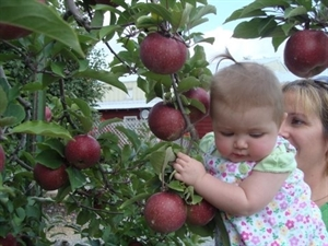 Apple Pickin' Jubilee