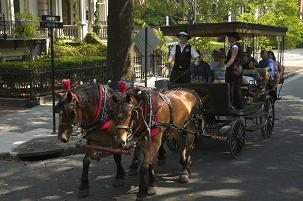 Savannah Tourism and Sightseeing