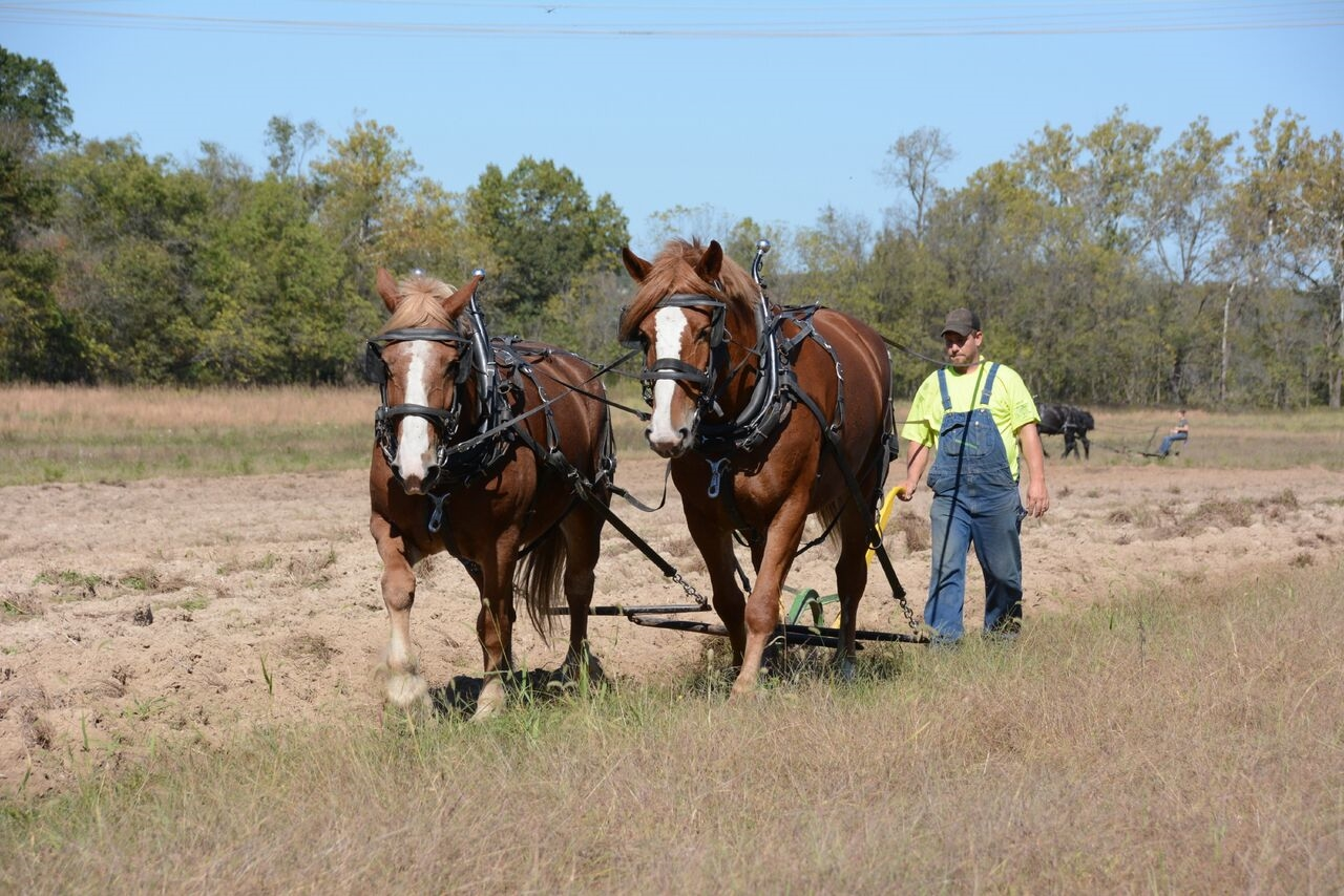 24th Mid-MO Horse, Mule, & Ox Farming and Historical Crafts